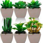 Kit Com 3 Plantas Mini Suculenta